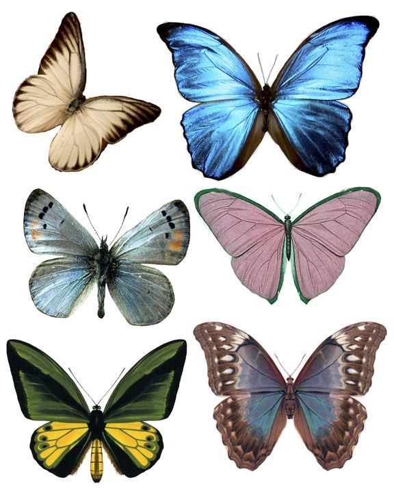 Free Butterfly, Bird & Flower images  (Right click & save to your computer to print images).