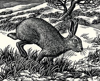 Ambling Hare - Wood Engraving by Howard Phipps