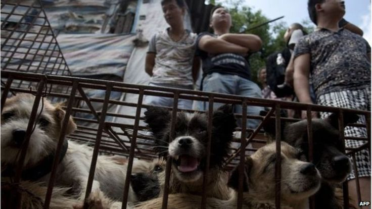 China Yulin dog meat festival under way despite outrage -  22 June 2015 - The tradition of eating dog meat dates back four or five hundred years in China, South Korea and other countries, as it is believed to ward off the heat of the summer months, according to state news agency Xinhua. However, this festival began in recent years, Xinhua said.