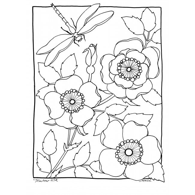 wild rose coloring page illustrated by marie browning for tombow