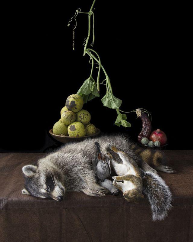 En lo más fffres.co: La artista que convierte animales atropellados en naturaleza muerta: Kimberly Witham utiliza animales muertos y… #Art