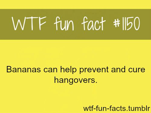 can bananas cure hangovers  MORE OF WTF-FUN-FACTS are coming HERE  funny and weird factsONLY