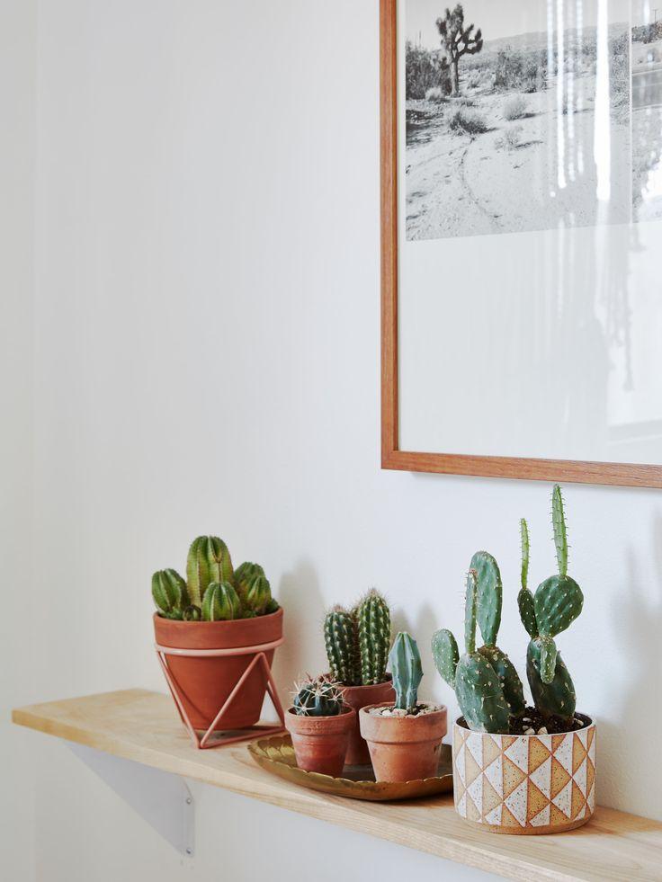 Cactus shelf display at the Joshua Tree Casita Air Bnb, Kate Sears photo