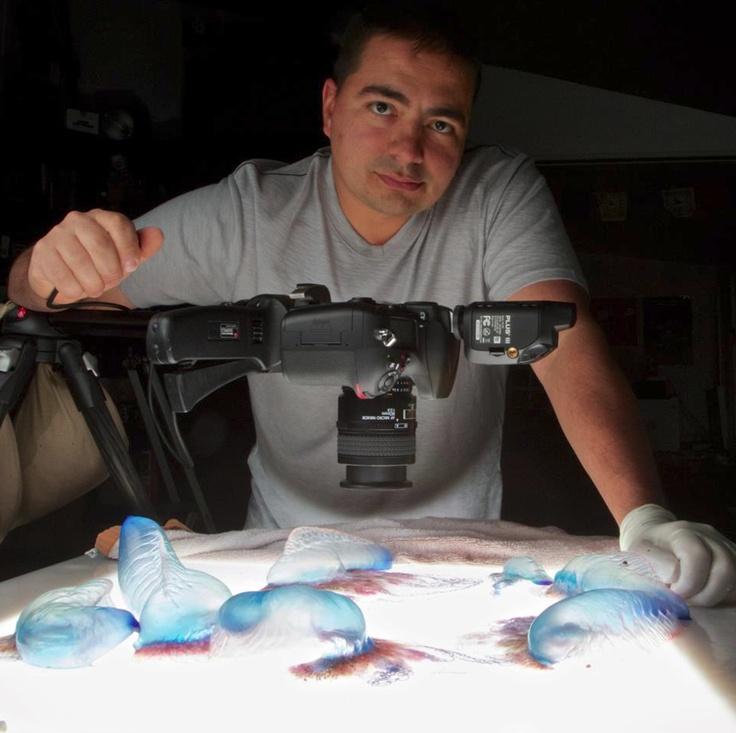 電気クラゲのサイケデリックな写真:ギャラリー