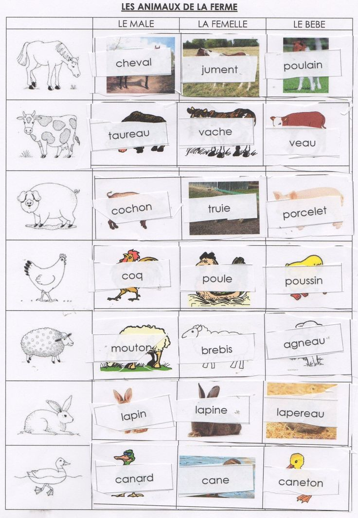 Les animaux de la ferme. Great idea for learning all the words for animal families.