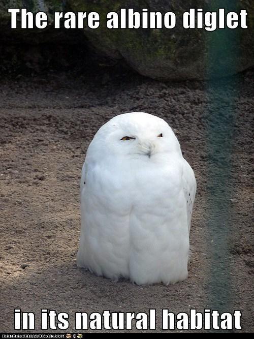 Animal Capshunz - albino - All of the Internet's Animals. Captioned - Funny Animal Captions - Cheezburger - BETA