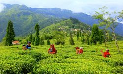 Darjeeling Gangtok & Kalimpong 6 Nights Package