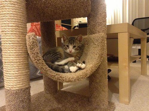 Como fazer arranhadores para gatos animals pinterest - Fotos de casas para gatos ...