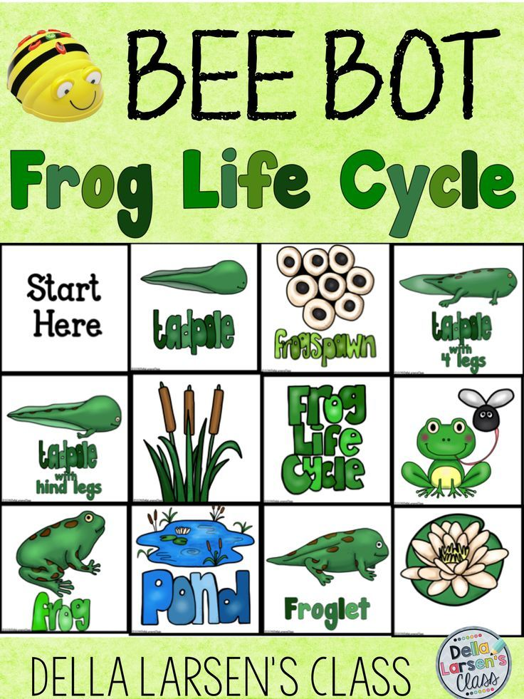 BeeBot activity mat for your science unit on the life cycle of the frog. Perfect for Focus on K2.