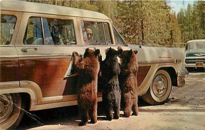 ...love the car, too.: Stations Wagon, Bears Cubs, Cars, Picnics Baskets, Three Bears, Baby Bears, Picnics Food, Photo, Animal