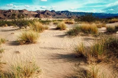 Types of Desert Grass