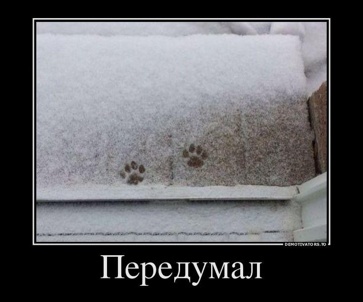 Нерешительный кот