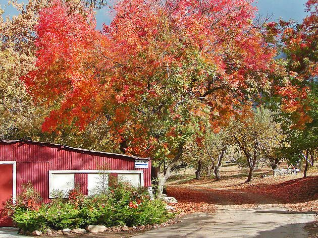 Most romantic fall date ideas in the Los Angeles area, 2016