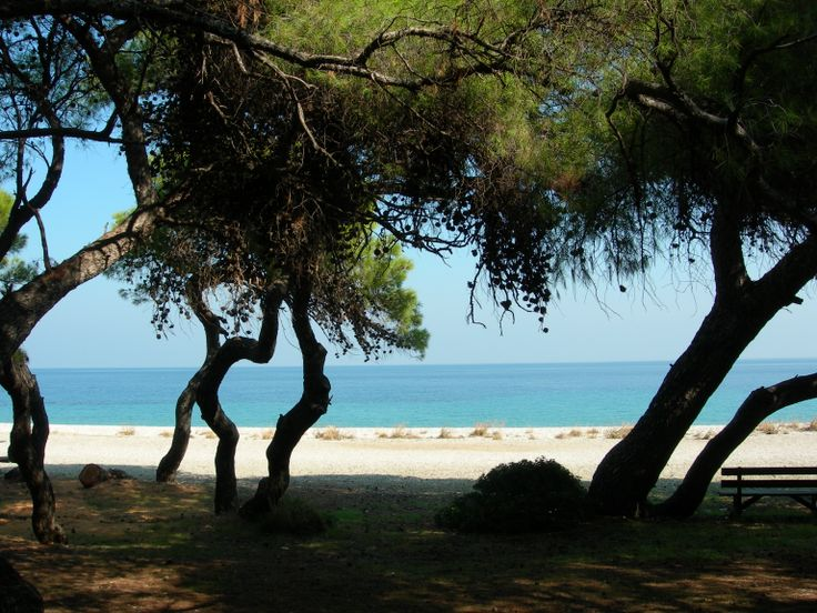 Peukias pine forest by the sea. One of the most beautiful places in the area.