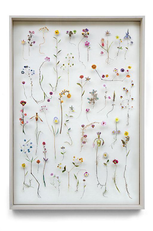 Tableau botanique : un herbier encadré comme une affiche