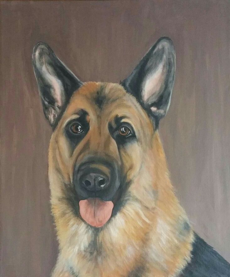 German Shepherd 50x70 cm acrylic on canvas