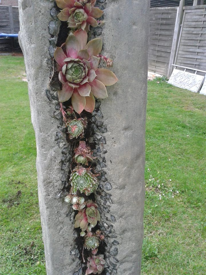 Cute Dachwurz S ule Diy GartendekoNeue IdeenSch ner GartenGarten