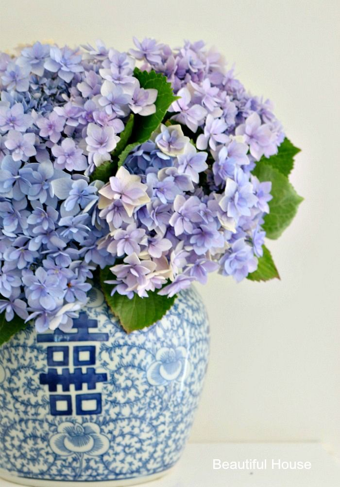 How to care for your Hydrangeas