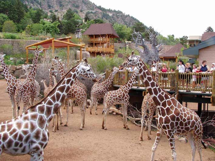 5 Hidden Zoos In Colorado That You Probably Never Visited   The Denver City Page