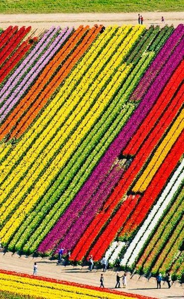 "Early spring is the best time for blooms, and the Skagit Valley Tulip festival takes place in April; however, you can still frolic through fields of tulips and daffodils throughout the summer using this bloom map as your guide. If you do manage to make it during peak season, don't miss the opportunity to photograph yourself running through the designated ""kite field"" for maximum Insta-acclaim."