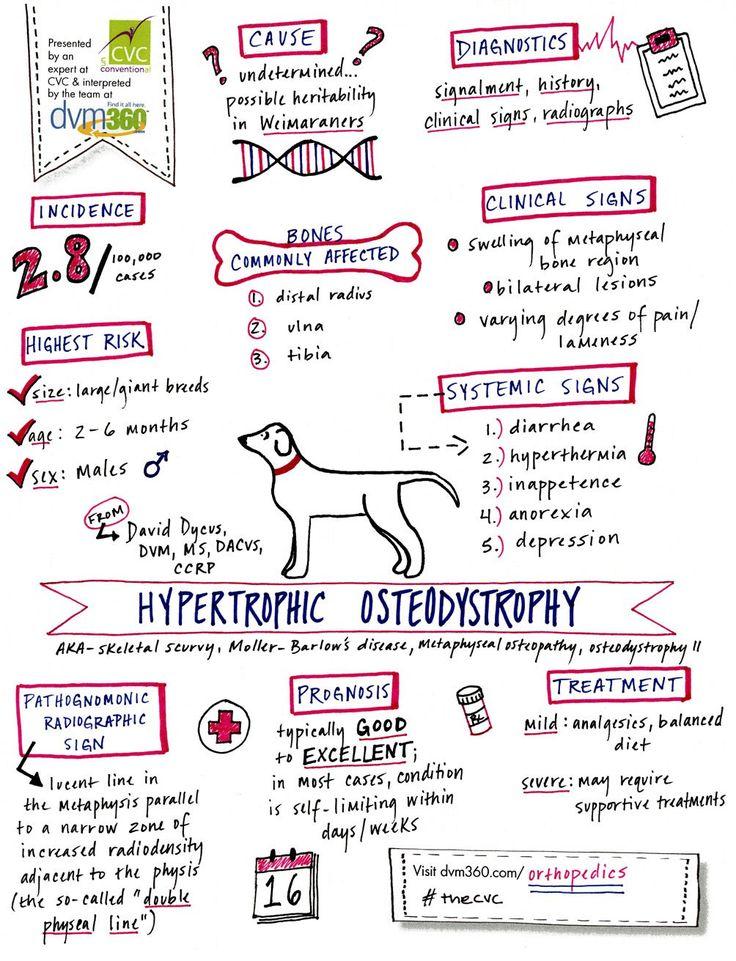Hypertrophic osteodystrophy doodle--dvm360.com