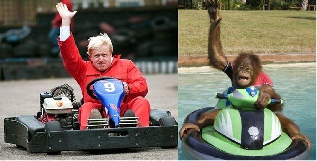 Boris Johnson is an Orangutan! This images are great!