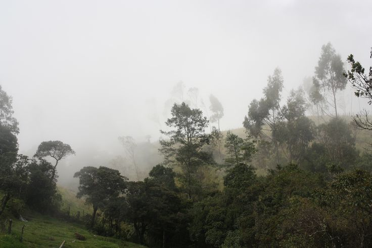 Unfortunately or fortunately, sometimes in the mountain you get mist that don´t let you see your objectives, but you can get cool pictures.