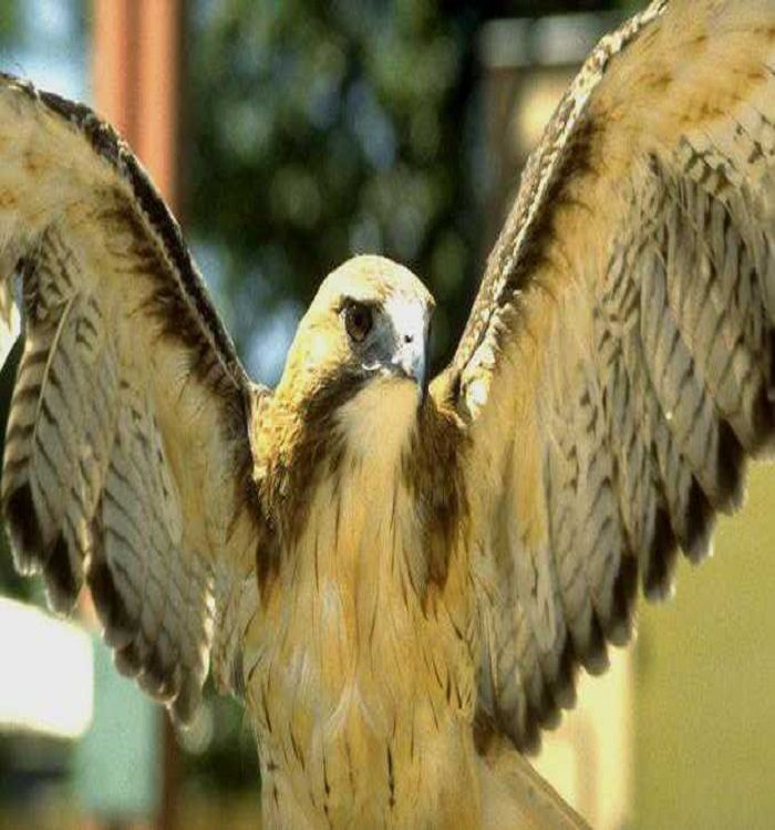 Fantastic Pic Birds Of Prey Names Ideas Being A Birds Connected With Feed Photographer The Most Crucial Difficulty Largest Bird Of Prey Prey Dream Vacations