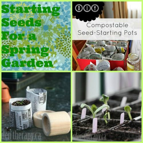 How to start seeds indoors -- lots of tips!: Container Gardens, Favorite Bloggers, Indoor Greenhouse, Spring Seeds, Seeds Indoor, Flower Gardening, Spring Garden, Start Spring, Container Gardening