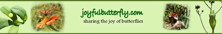 Butterfly website with great information