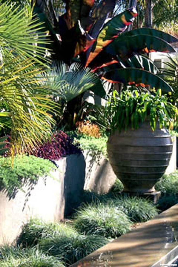 Glamorous bamboo fencing mode miami tropical landscape image ideas - Tropical Mix Of Size Color Texture Plus An Oversized Pot For Planting Or Water Feature Garden Lights Landscape Design Ca