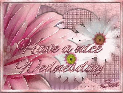 Have a Nice Wednesday pink days days of the week wednesday hump day graphic happy wednesday wednesday quote