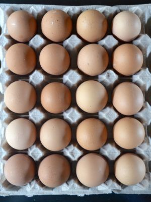 huevos de campo tamaño jumbo