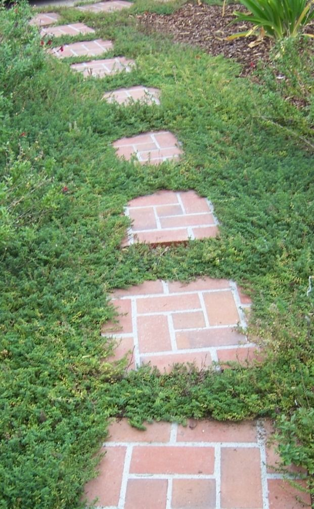 Brick Stepping Stone Pathway With Creeping Thyme Garden