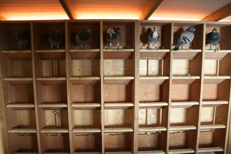 free pigeon loft plans | Pigeon Loft Plans Free submited images | Pic 2 Fly