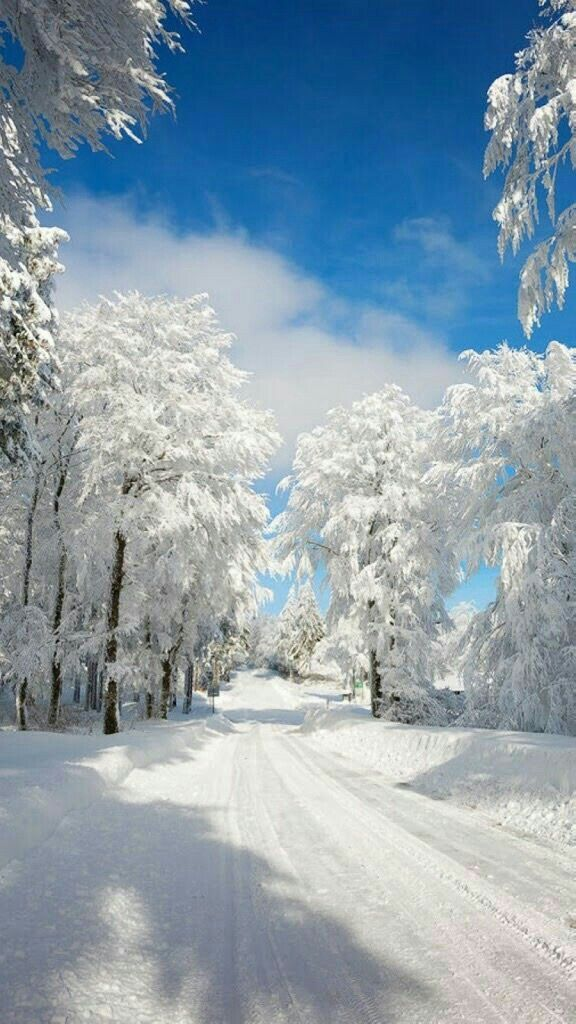 Beautiful scene with ice and snow.