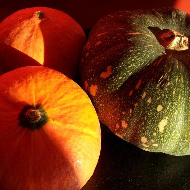 Autumn Harvest Photography