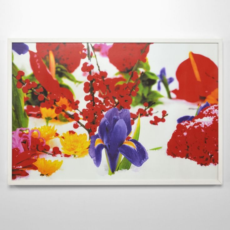 Winter Garden (Portfolio of 8) - Marc Quinn - Weng Contemporary  https://www.wengcontemporary.com/shop/product/winter-garden-portfolio-of-8 #marcquinn #wintergarden #wengcontemporary #buyonline #print #pigmentprint