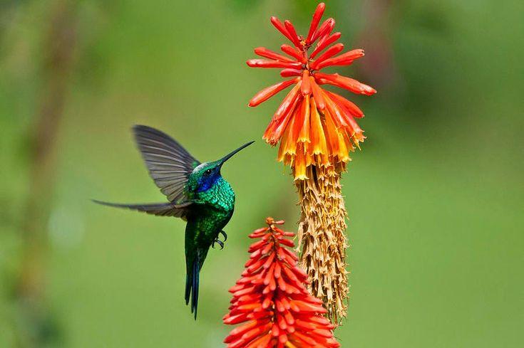 Quelques petites choses au sujet du colibri