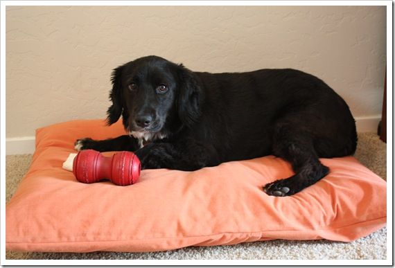 How to Make a Dog Bed – Step-by-Step With Photos  - - Nice recycle of stupid flat old pillows!!
