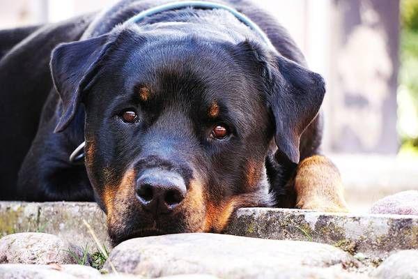 Anett Seidensticker Photographie Rasseportrait Lagotto Romagnolo Podgi Beppa Lagotto Romagnolo Ha Lagotto Romagnolo Puppy Lagotto Romagnolo Pretty Dogs