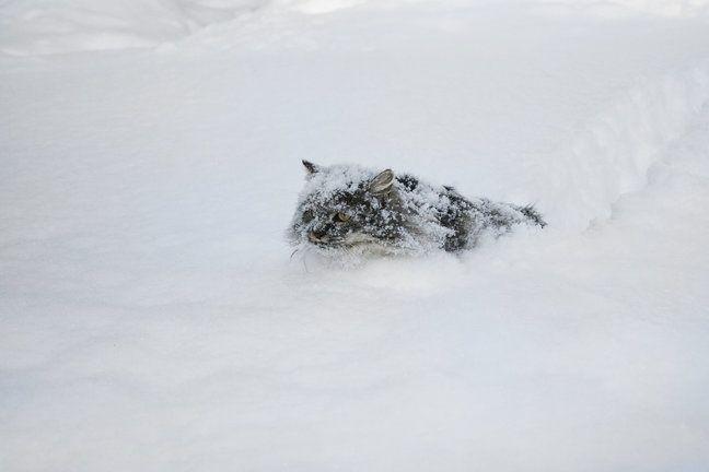 this fucking snow, seriously - Album on Imgur