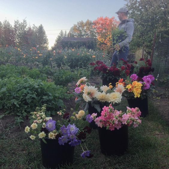 growers of beauty: meet flower farmer Antonio Valente on periwinkleflowers.blogspot.com