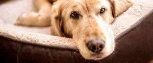 Déménager lorsque l'on possède un chien : trouver un logement