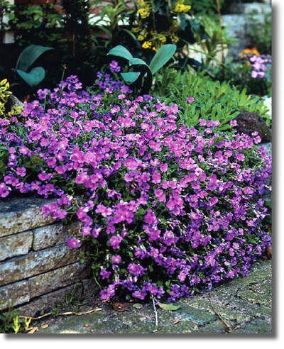 Sfeer in de tuin in april met rijk bloeiende vasteplanten langs paden en randen van borders en perken | Tuinkrant.com
