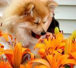 Allergieën bij honden | Artikels | Hondencentrum