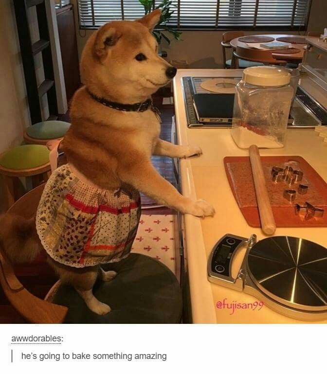 My Effy refuses the apron but she loves counter work :) おろ?犬村さん?