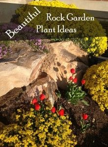 Beautiful Rock Garden Plant Ideas