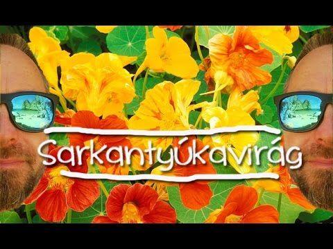 Sarkantyúkavirág, a konyhakert őre
