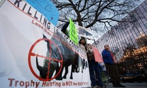 A protest outside the Dallas Convention Centre against the auction of a black rhino hunting permit.